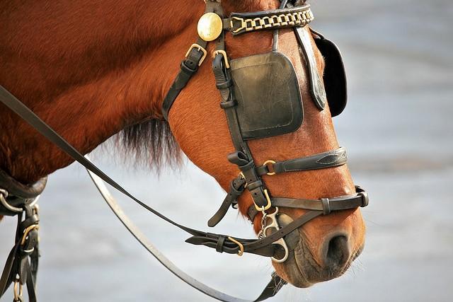 Image result for horse blinder images